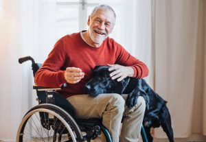 disabled senior man in wheelchair playing with pet dog